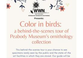 Color In Birds Flyer